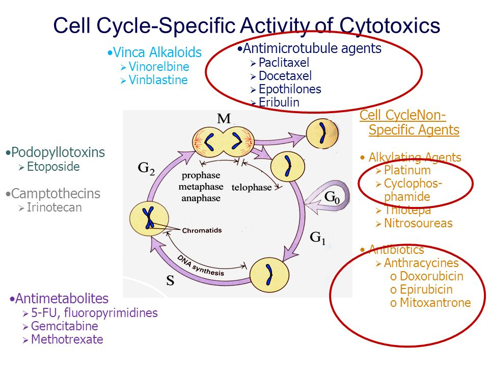 Cell Cycle-Specific Activity of Cytotoxics