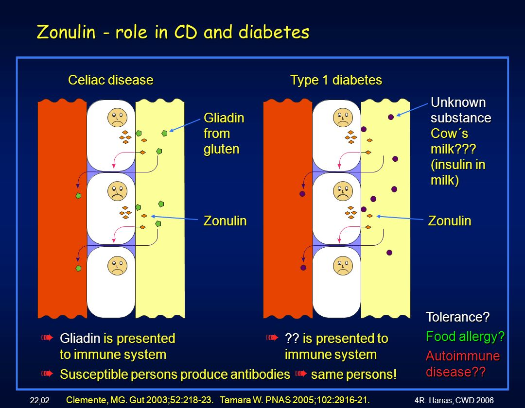 Zonulin - role in CD and diabetes