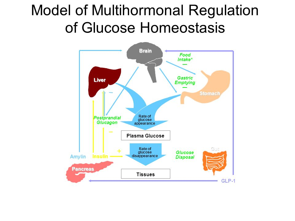 Model of Multihormonal Regulation of Glucose Homeostasis