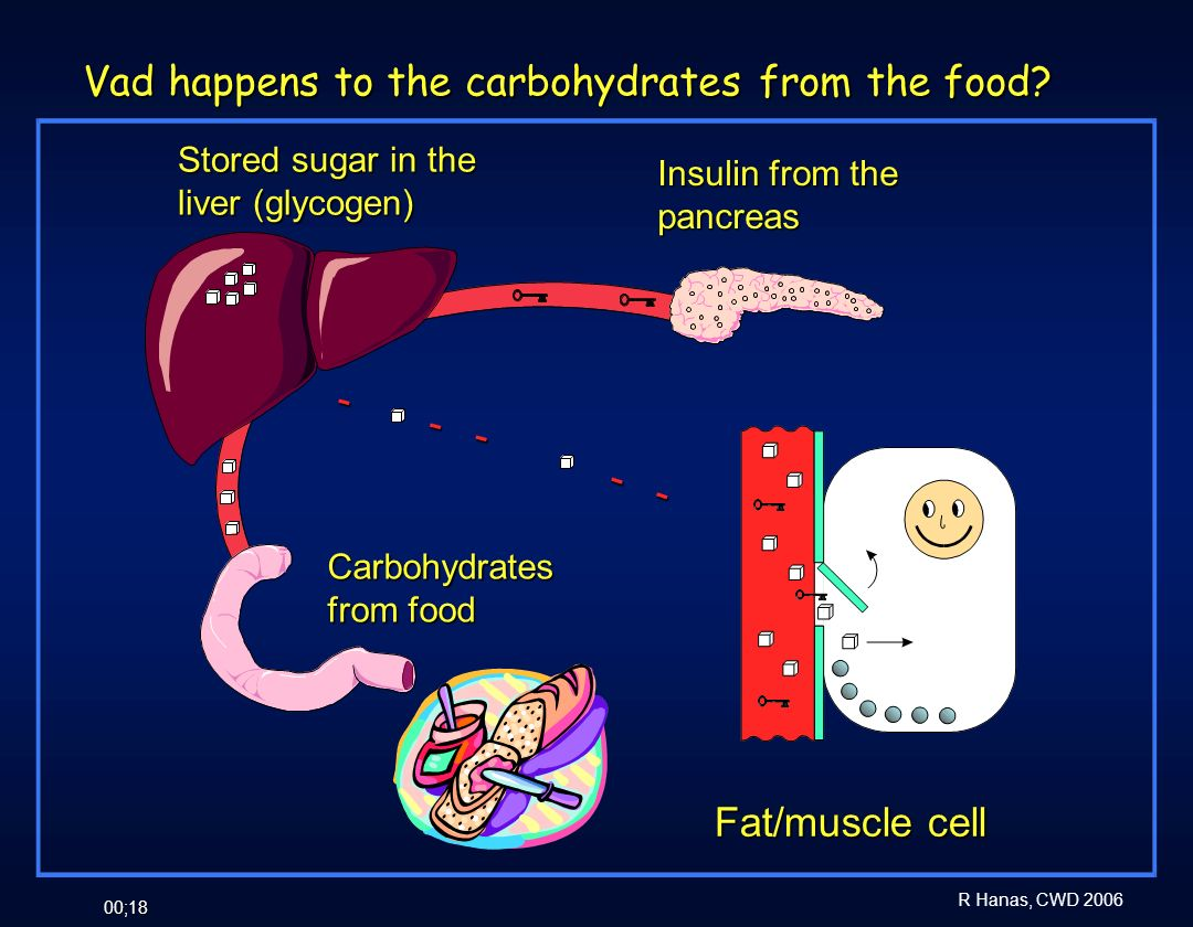 Vad happens to the carbohydrates from the food