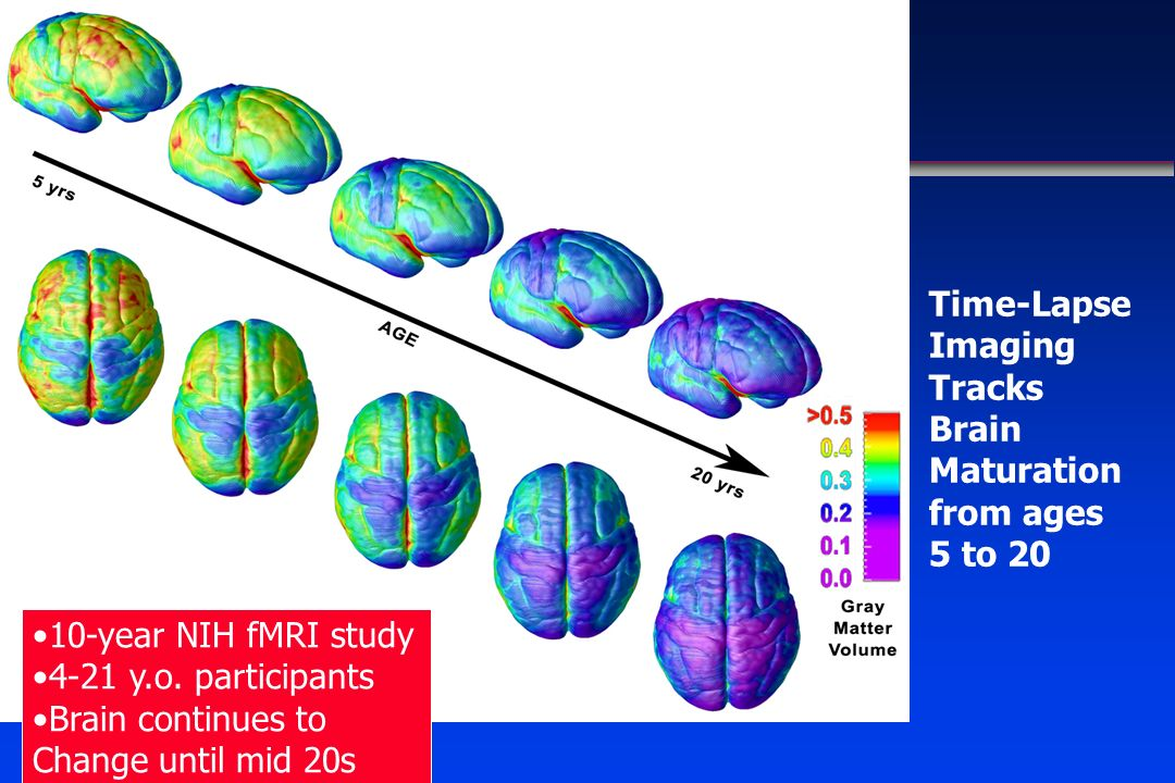 Time-Lapse Imaging Tracks Brain Maturation. from ages 5 to 20. 10-year NIH fMRI study. 4-21 y.o. participants.