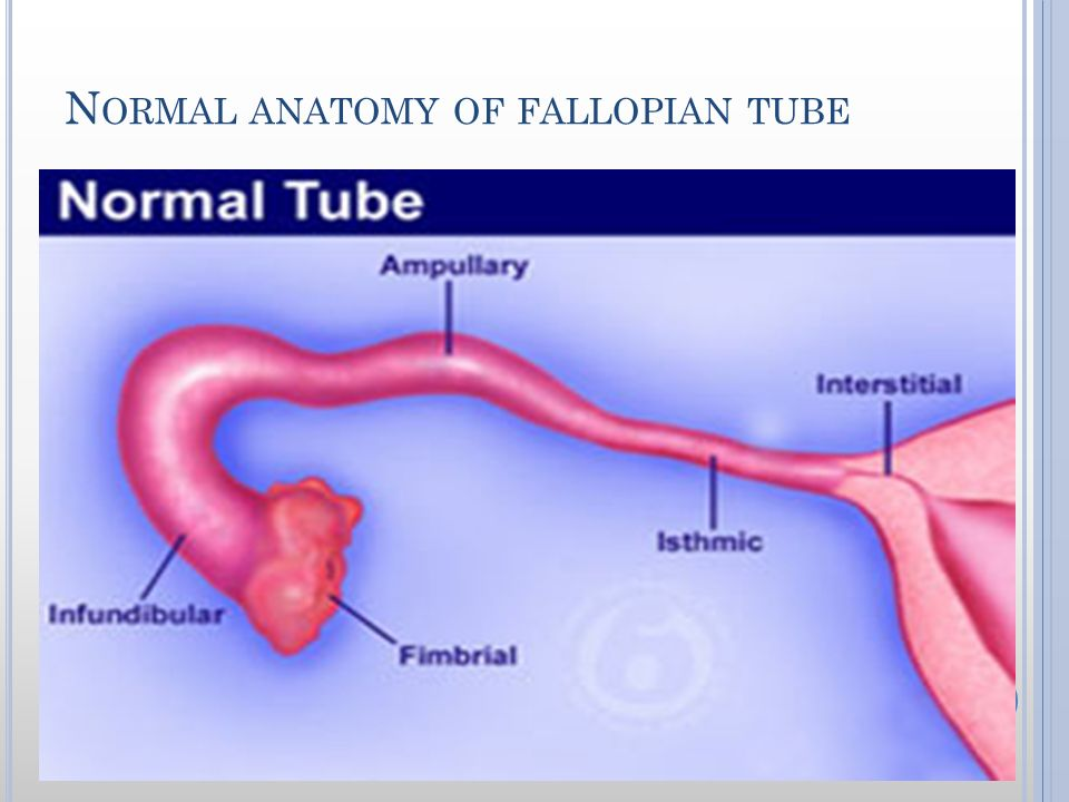 Fallopian Tube Anatomy