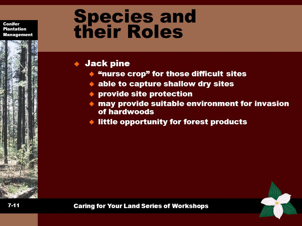 Species and their Roles