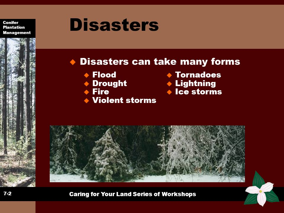Disasters Disasters can take many forms Flood Drought Fire