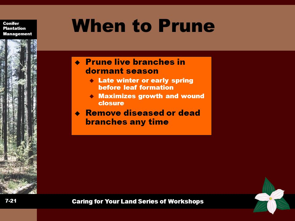 When to Prune Prune live branches in dormant season