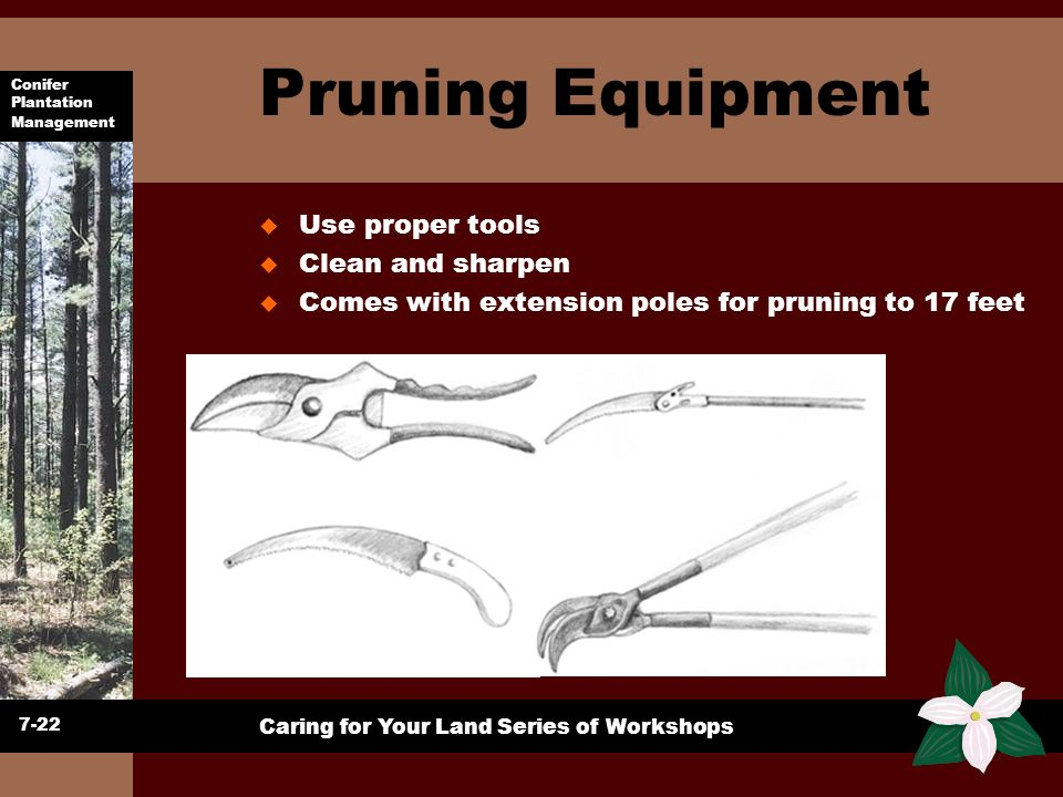 Pruning Equipment Use proper tools Clean and sharpen