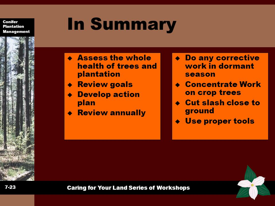 In Summary Assess the whole health of trees and plantation
