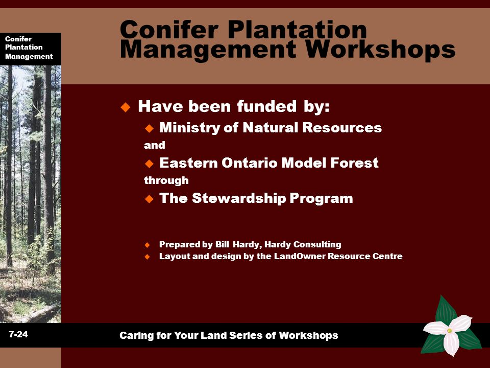 Conifer Plantation Management Workshops