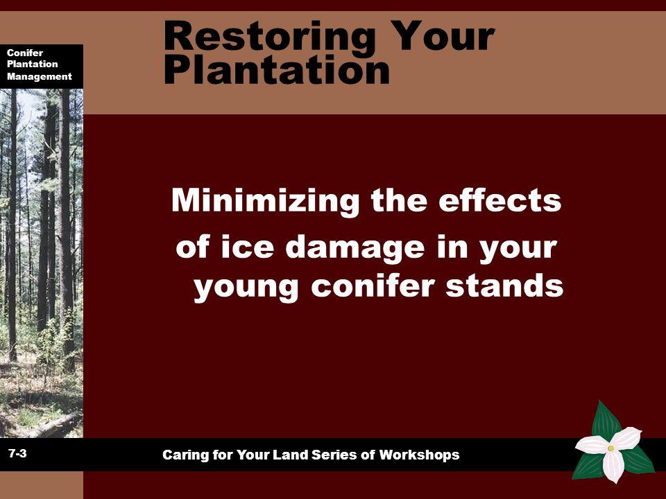 Restoring Your Plantation