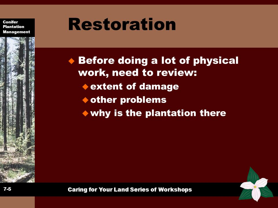 Restoration Before doing a lot of physical work, need to review: