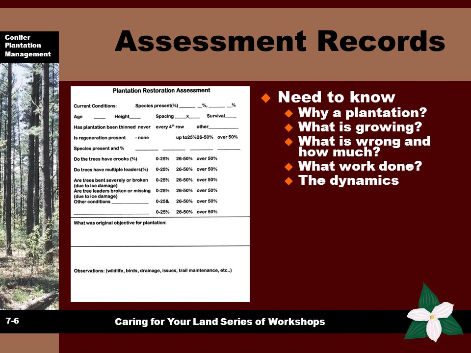Assessment Records Need to know Why a plantation What is growing