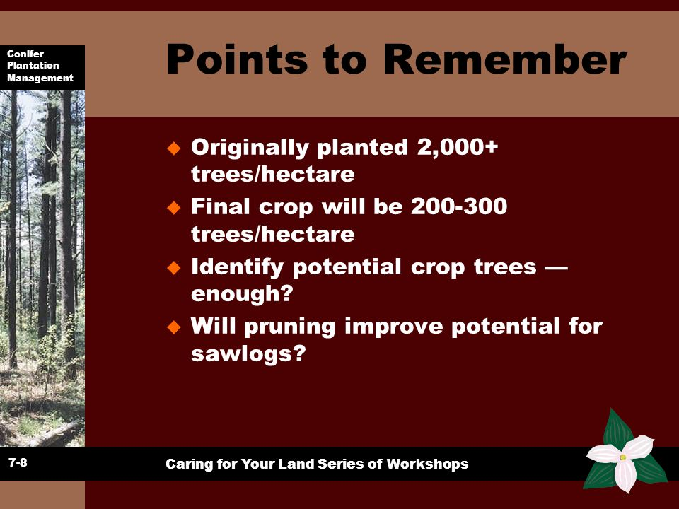 Points to Remember Originally planted 2,000+ trees/hectare