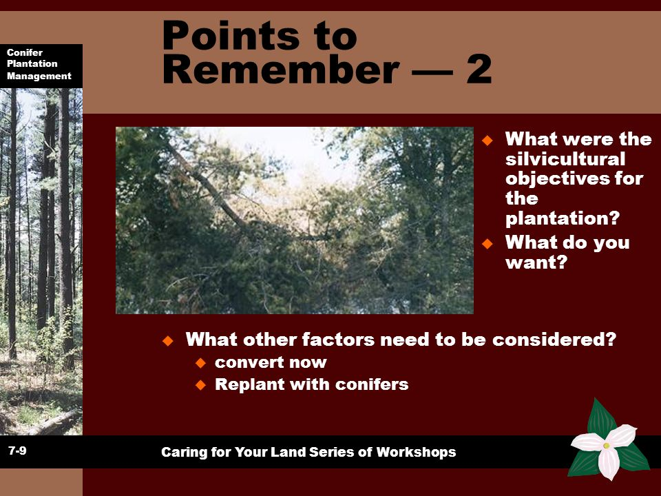 Points to Remember — 2 What were the silvicultural objectives for the plantation What do you want