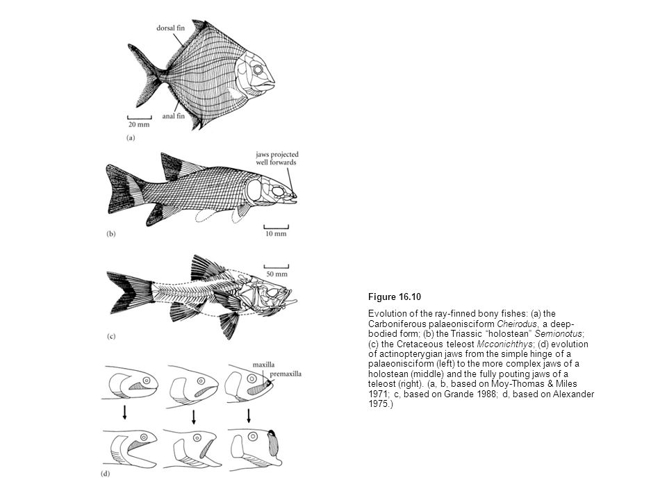 Figure 16.10