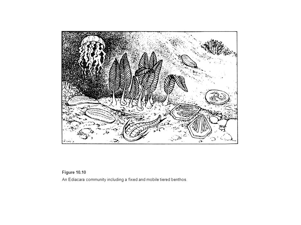 Figure 10.10 An Ediacara community including a fixed and mobile tiered benthos.