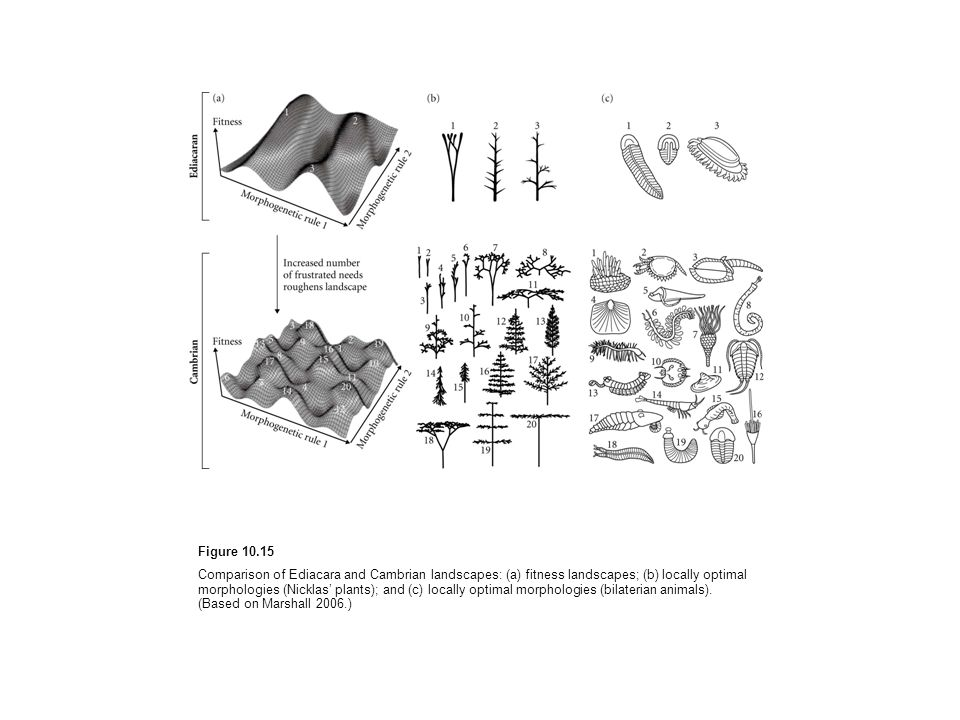 Figure 10.15