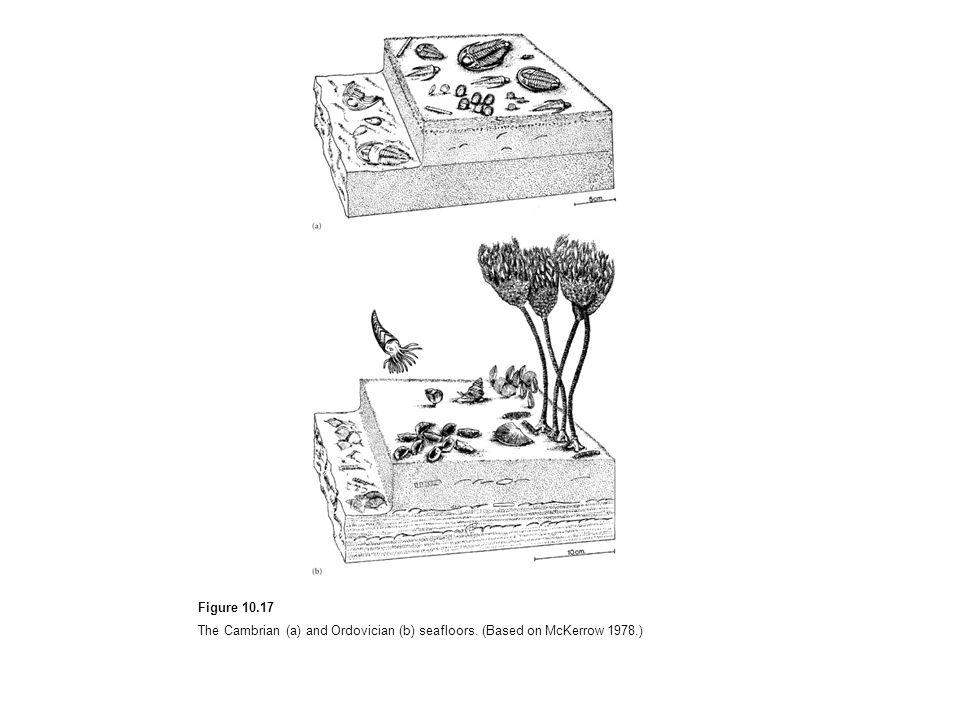 Figure 10.17 The Cambrian (a) and Ordovician (b) seafloors. (Based on McKerrow 1978.)