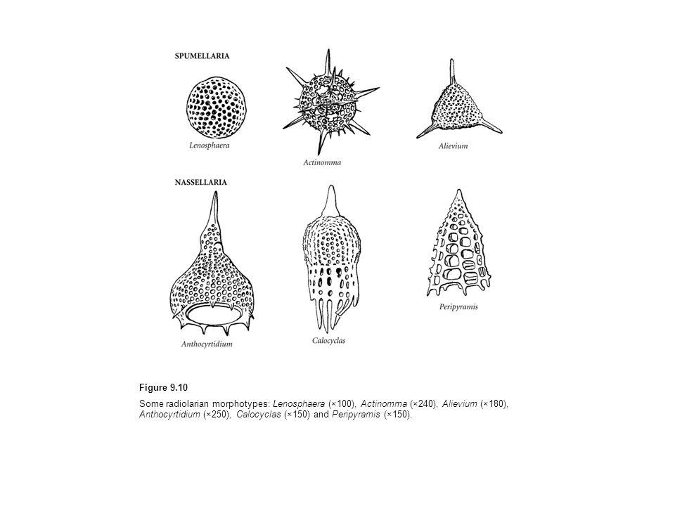 Figure 9.10