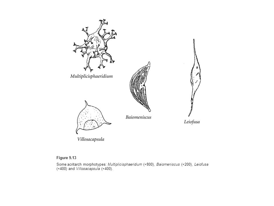 Figure 9.13 Some acritarch morphotypes: Multiplicisphaeridium (×800), Baiomeniscus (×200), Leiofusa (×400) and Villosacapsula (×400).