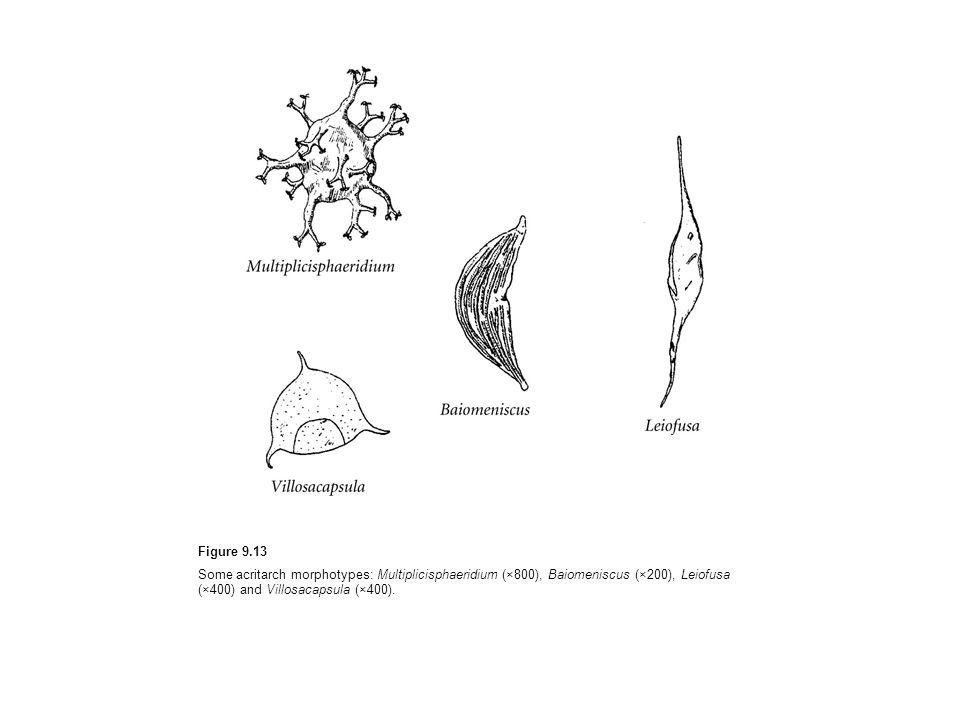 Figure 9.13Some acritarch morphotypes: Multiplicisphaeridium (×800), Baiomeniscus (×200), Leiofusa (×400) and Villosacapsula (×400).