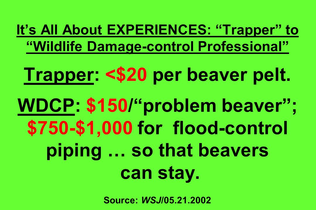 It's All About EXPERIENCES: Trapper to Wildlife Damage-control Professional Trapper: <$20 per beaver pelt.