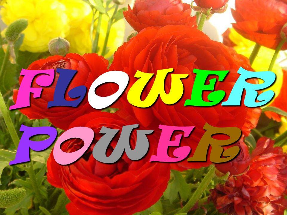 FLOWER POWER FLOWER POWER web