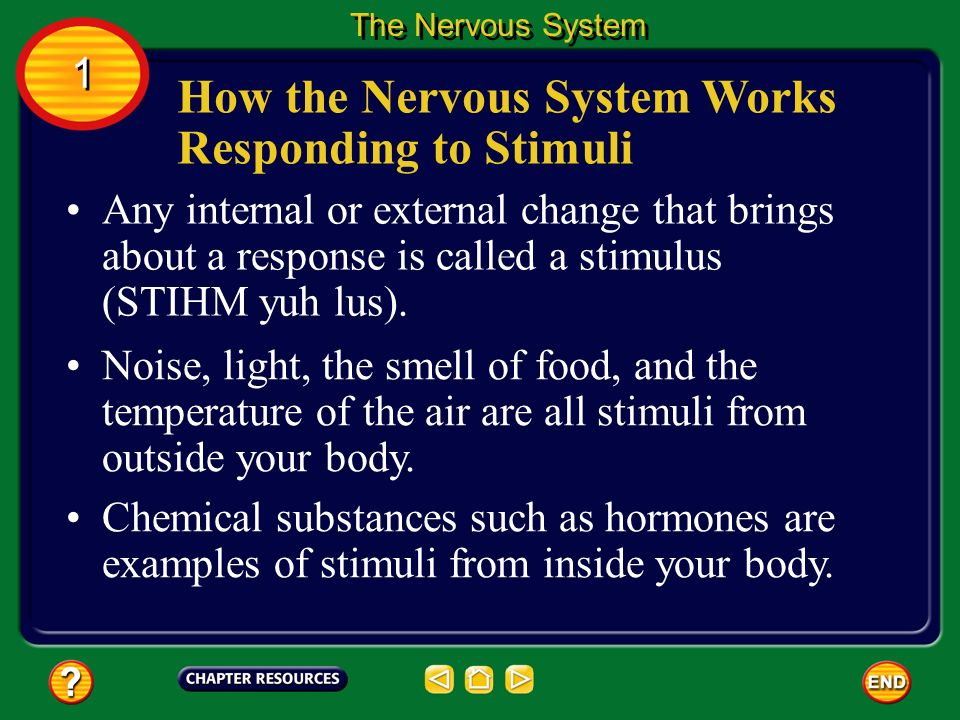 How the Nervous System Works Responding to Stimuli