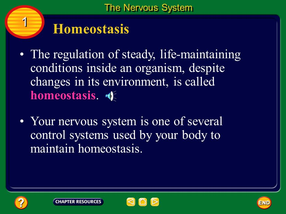 The Nervous System 1. Homeostasis.