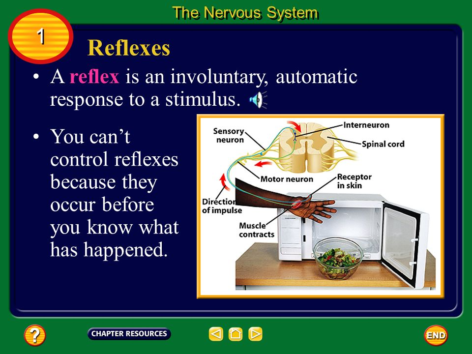 The Nervous System 1. Reflexes. A reflex is an involuntary, automatic response to a stimulus.