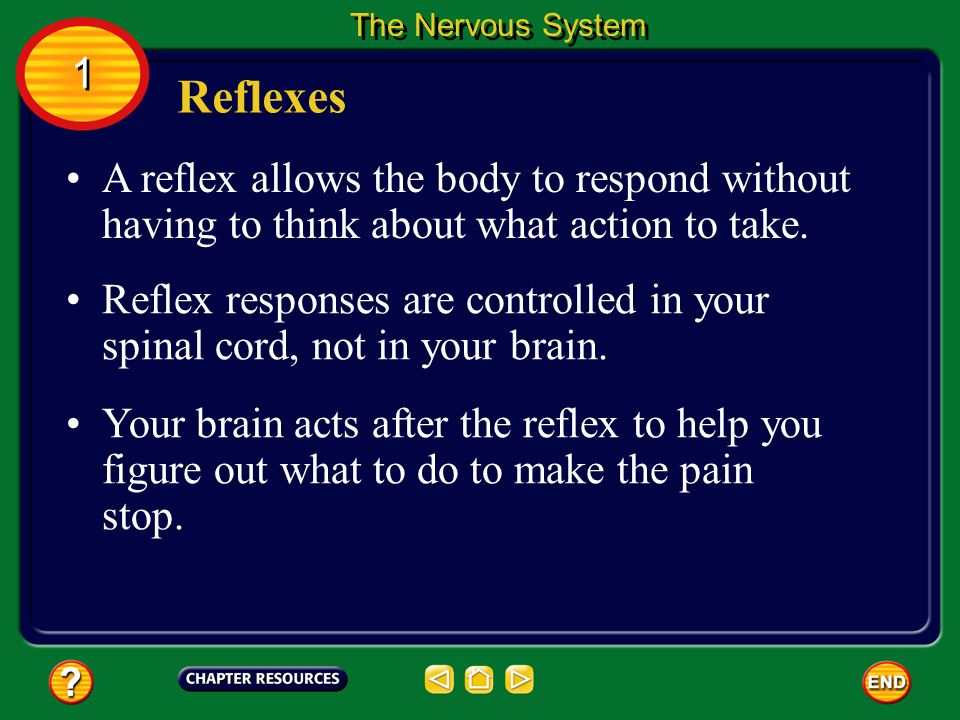 The Nervous System 1. Reflexes. A reflex allows the body to respond without having to think about what action to take.