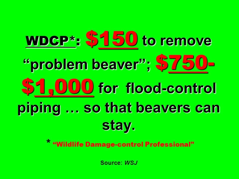 WDCP*: $150 to remove problem beaver ; $750-$1,000 for flood-control piping … so that beavers can stay.