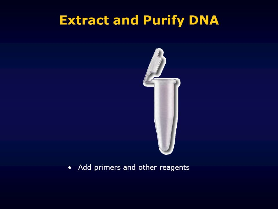 Extract and Purify DNA Add primers and other reagents