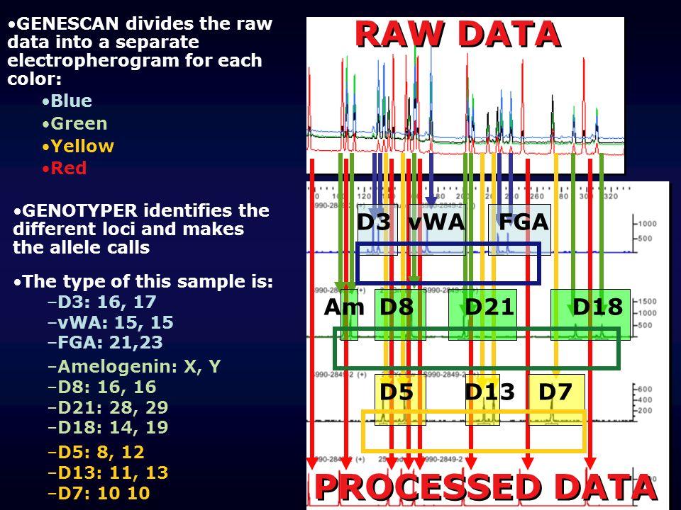 RAW DATA PROCESSED DATA D3 vWA FGA D8 D21 D18 D5 D13 D7 Am