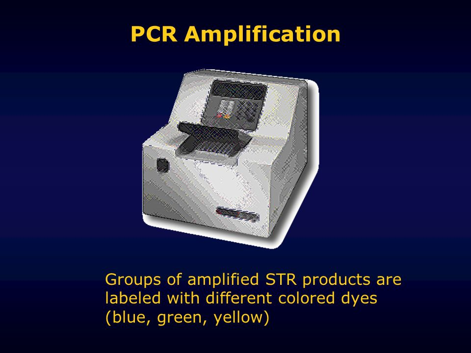 PCR Amplification Groups of amplified STR products are labeled with different colored dyes (blue, green, yellow)