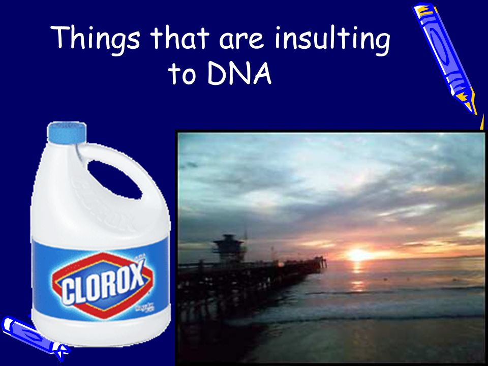 Things that are insulting to DNA