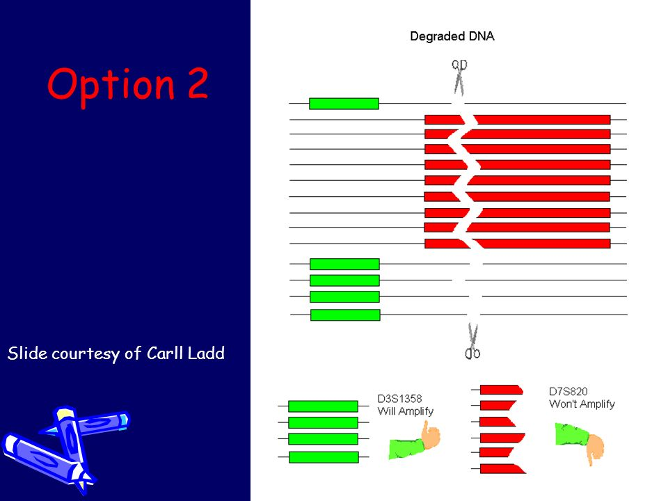 Option 2 Slide courtesy of Carll Ladd
