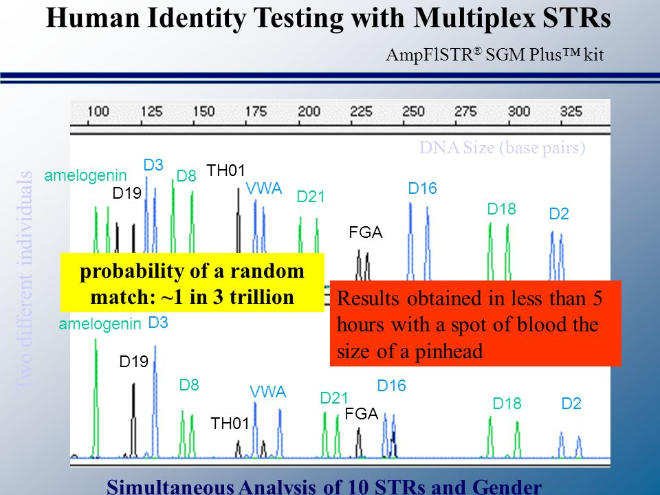 Human Identity Testing with Multiplex STRs