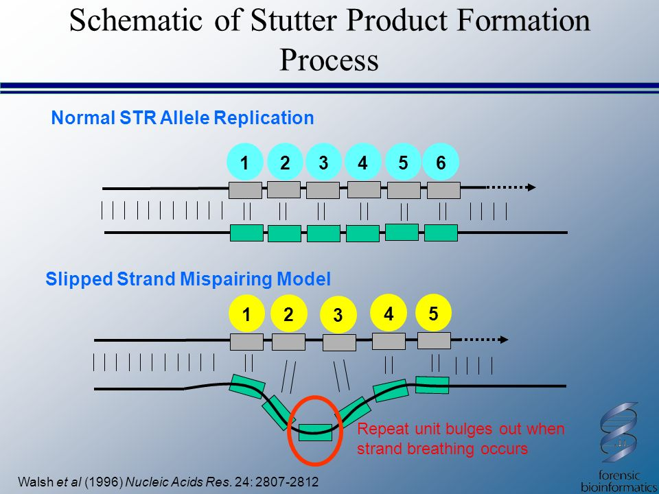 Schematic of Stutter Product Formation Process