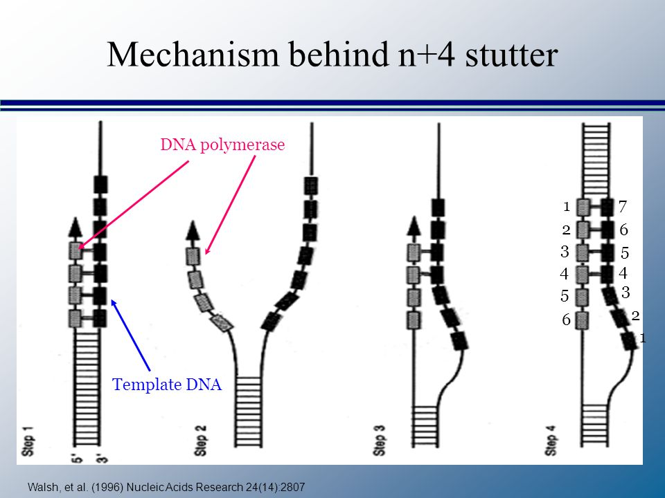 Mechanism behind n+4 stutter