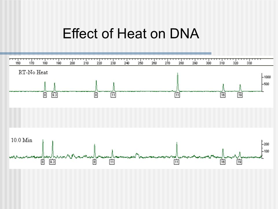 Effect of Heat on DNA