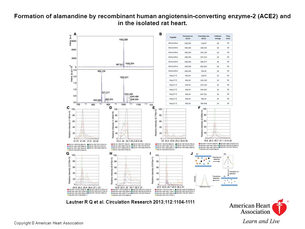 Formation of alamandine by recombinant human angiotensin-converting enzyme-2 (ACE2) and in the isolated rat heart.