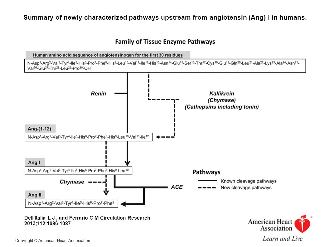Summary of newly characterized pathways upstream from angiotensin (Ang) I in humans.