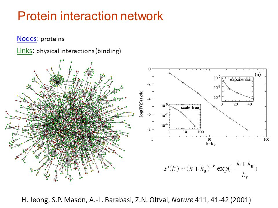 Prot P(k) Protein interaction network Nodes: proteins