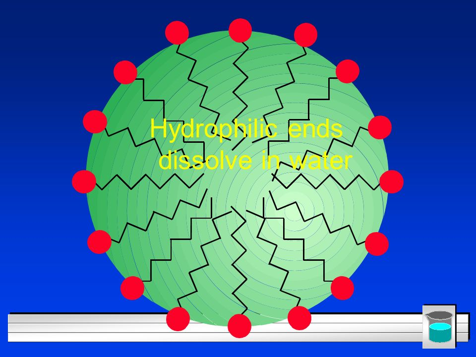 Hydrophilic ends dissolve in water