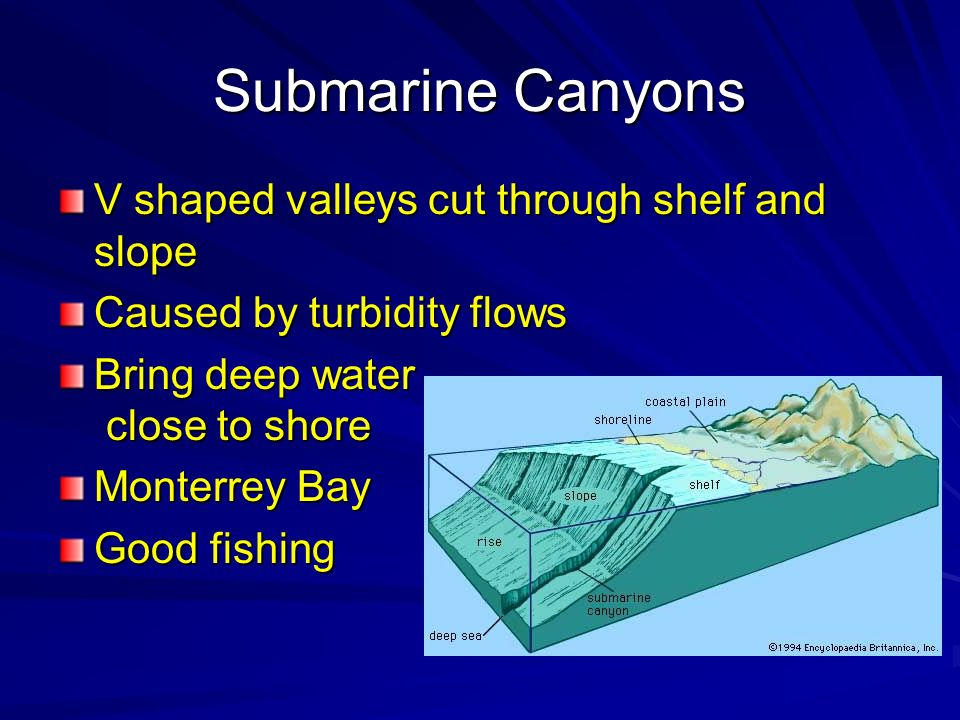 Submarine Canyons V shaped valleys cut through shelf and slope