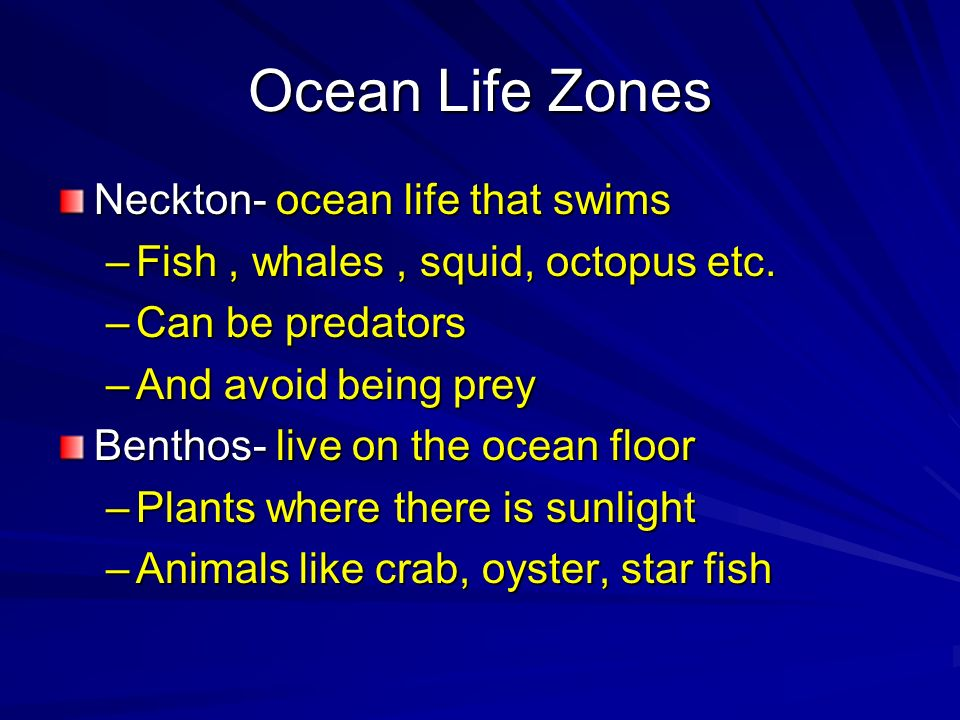 Ocean Life Zones Neckton- ocean life that swims