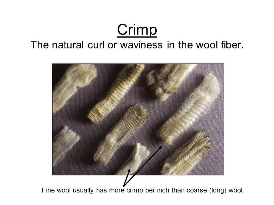 Crimp The natural curl or waviness in the wool fiber.