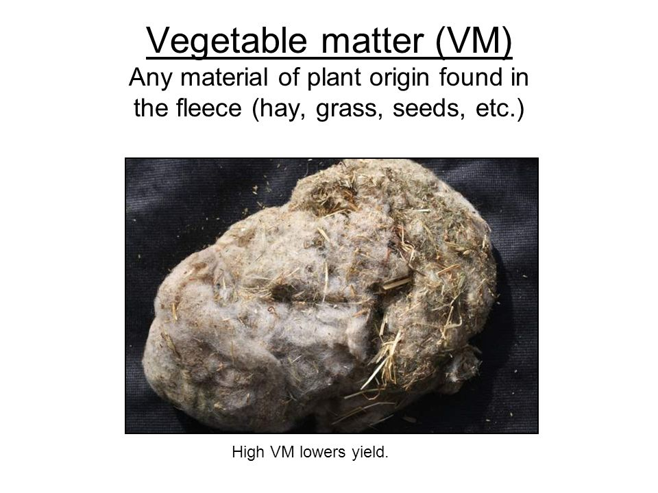 Vegetable matter (VM) Any material of plant origin found in the fleece (hay, grass, seeds, etc.)