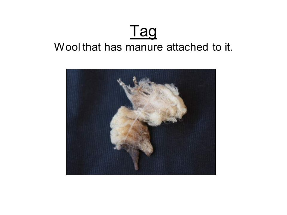 Tag Wool that has manure attached to it.