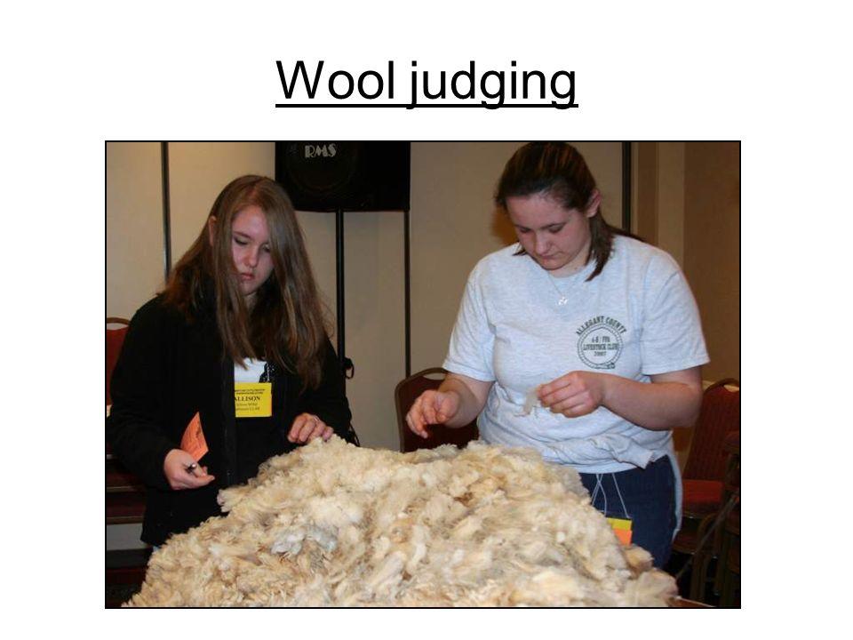 Wool judging